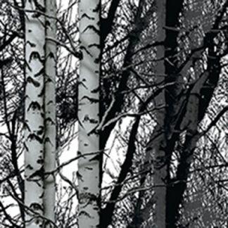 selvklæbende folie birketræer