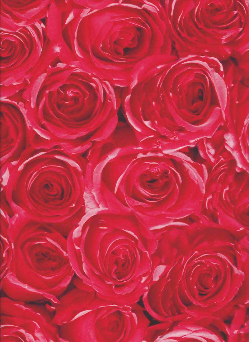 folie røde roser