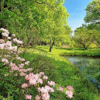fototapet Park in the Spring
