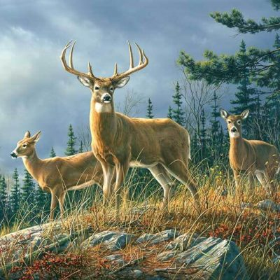 fototapet Autumn-Whitetails-0