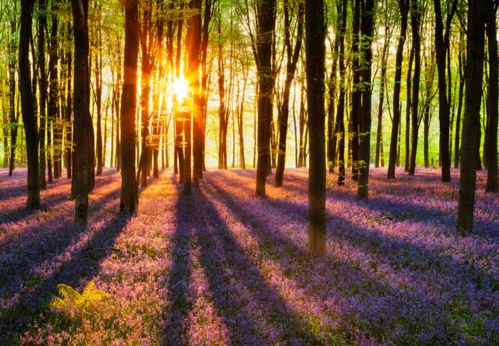 fototapet woodland