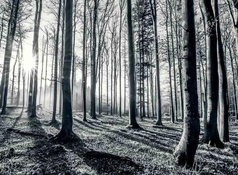 fototapet FOREST-004