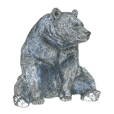 plakat-med-bjørn-i-farve