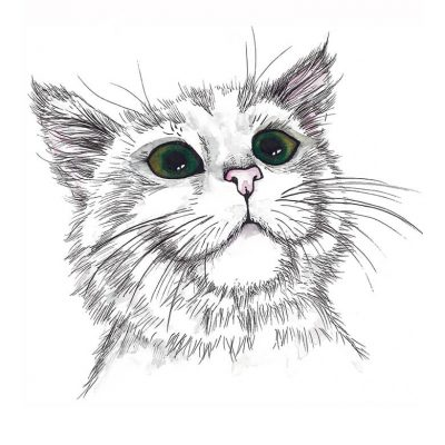 plakat-med-kat-og-grønne-øjne-int