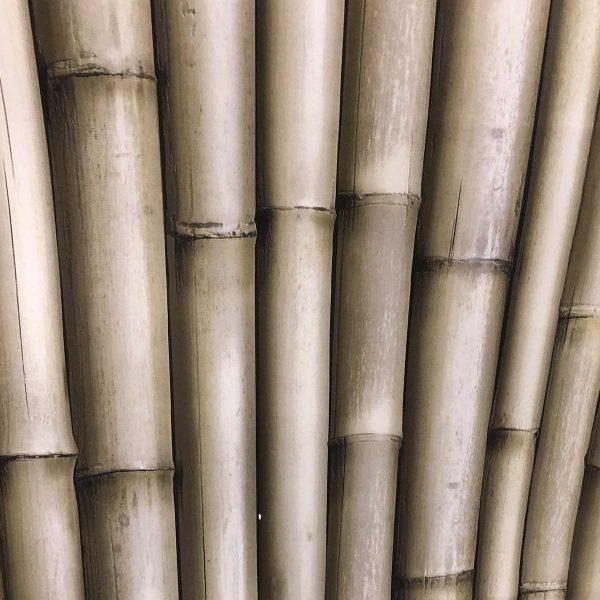 Bambustapet i en kraftig kvalitet. tapetet har en let grønlig farve, og du kan mærke rillerne imellem bambuspindene