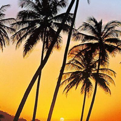 Fototapet med palmer i solnedgangen og havet ligger bagved
